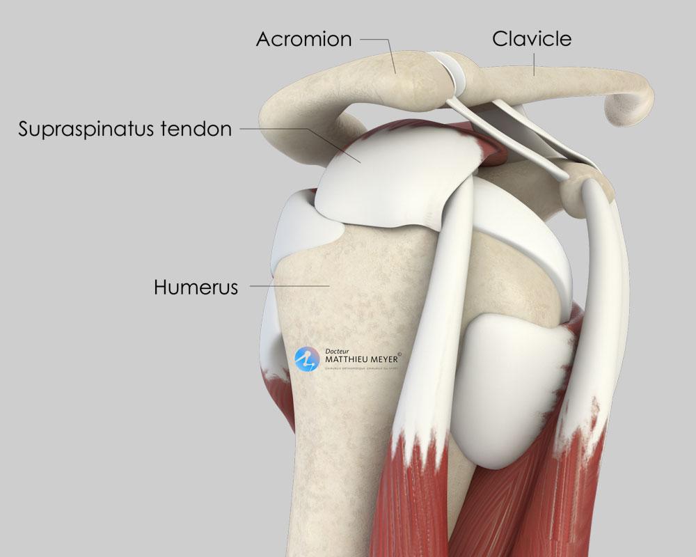 Normal shoulder (side view)