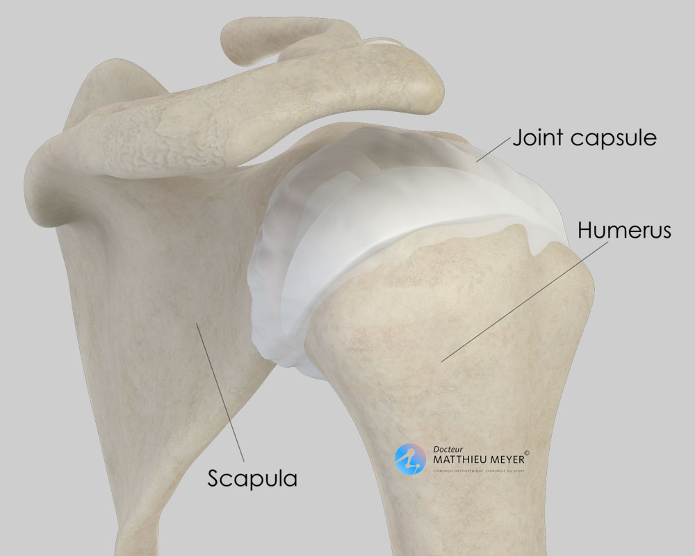 Normal shoulder (posterior view)